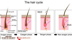 chu kỳ mọc tóc rụng tóc